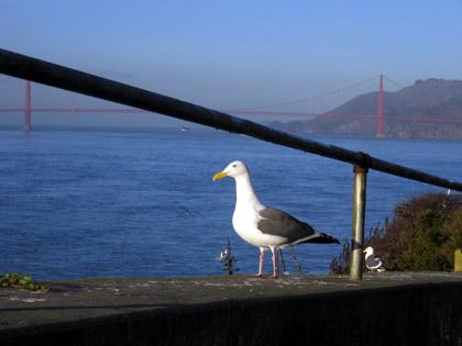 alcatraz-seagull.JPG
